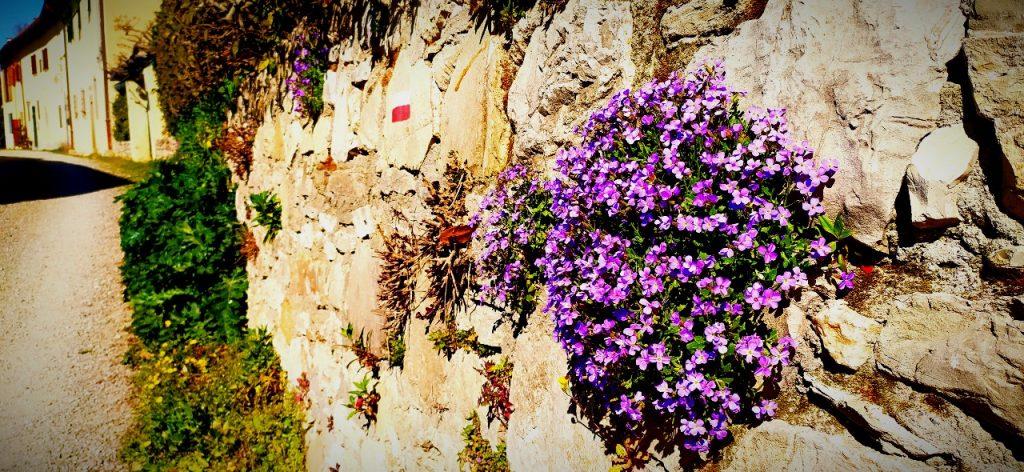 Terzano e i fiori che cominciano a sbocciare ovunque. Ormai è primavera