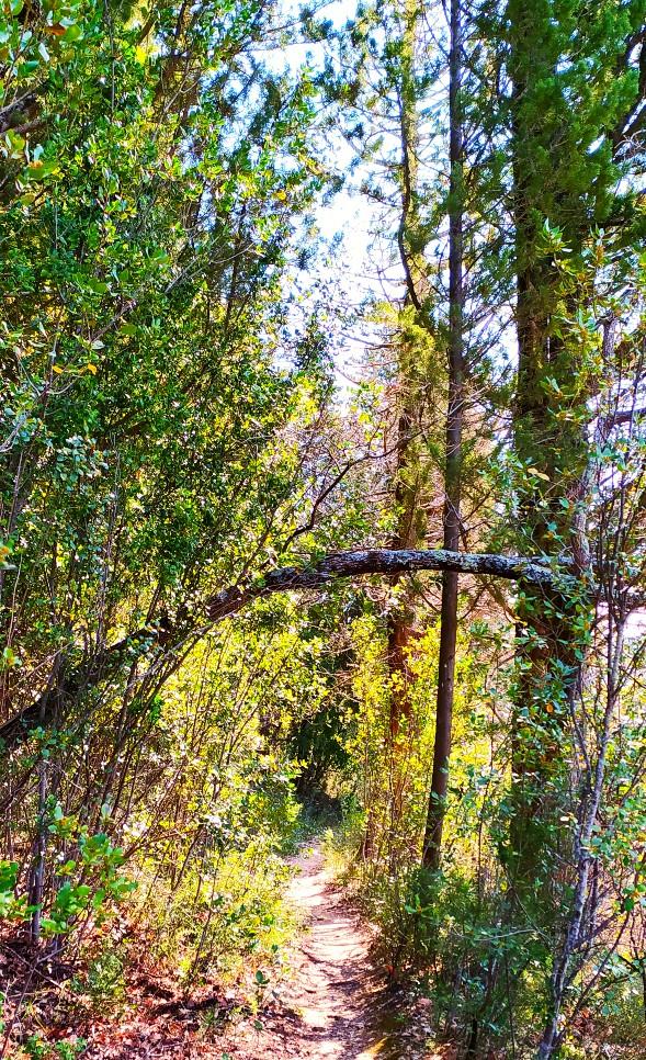 Il single track in mezzo al bosco che porta a Terzano